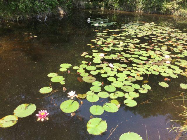 三石工場の池